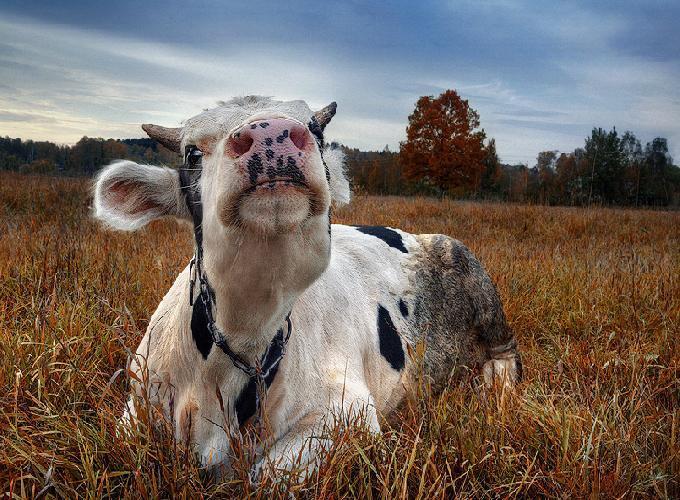 Вологодская область становится молочной гордостью страны