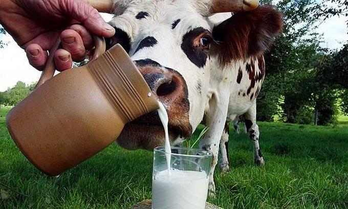 В Вологодской области определили лидеров по качеству молока