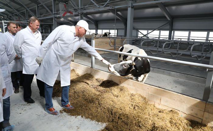 В Великом Устюге открывается современная ферма