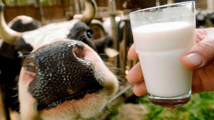В Вологодской области названы имена победителей конкурса операторов машинного доения коров