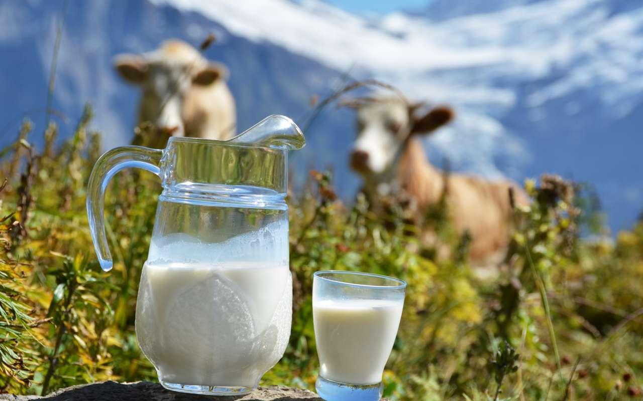 В Череповце сделают бутерброд весом 100 кг и запустят молочный фонтан