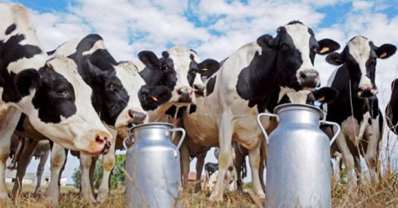 291 тысяча тонн молока произведена на Вологодчине за семь месяцев текущего года