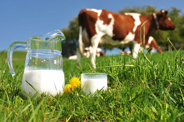 Молочная отрасль Вологодчины: вековые традиции и современный подход