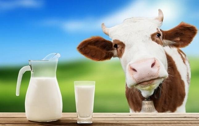 В Петербургских магазинах нашли молоко без молока из Кемеровской и Калужской областей