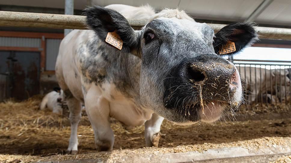 Переработчики молока просят увеличить господдержку