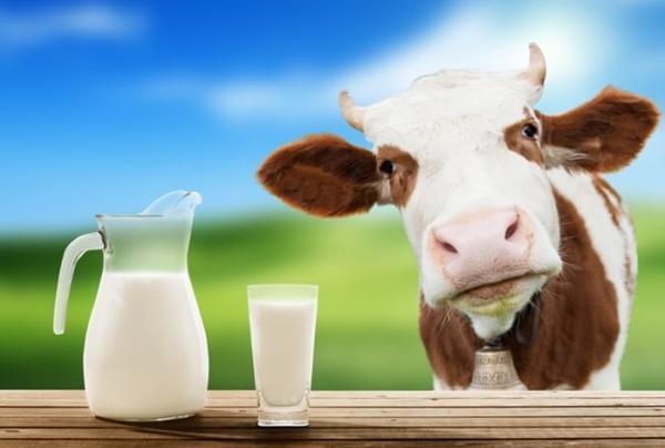 Некачественное молоко обнаружили в магазине Тверской области