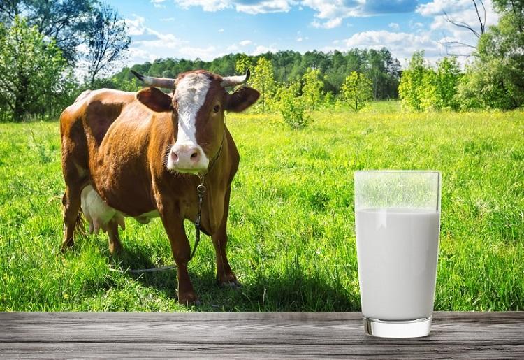 Устюженское молоко выходит на рынки соседних регионов