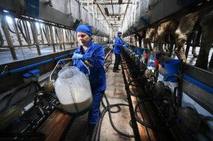 Производство вологодского масла и сыра вырастет в несколько раз