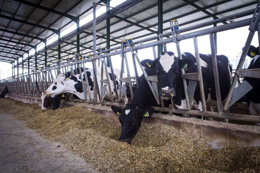 Две фермы за 450 млн рублей планируют построить в Вологодском районе