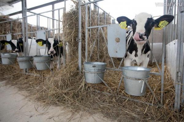 Фестиваль молока пройдёт 29 июля в Бресте
